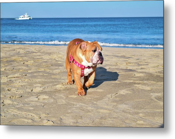 Peanut On The Beach Metal Print