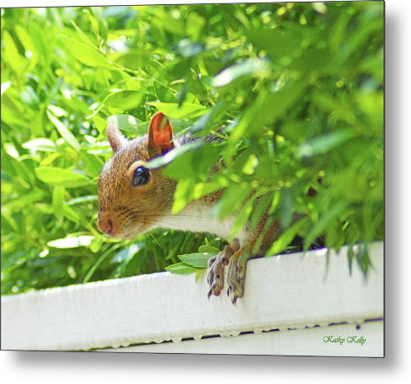 Peek-a-boo Gray Squirrel Metal Print