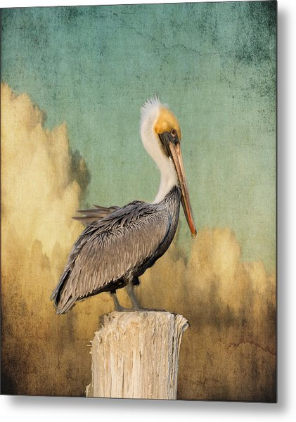 Pelican And Clouds Metal Print