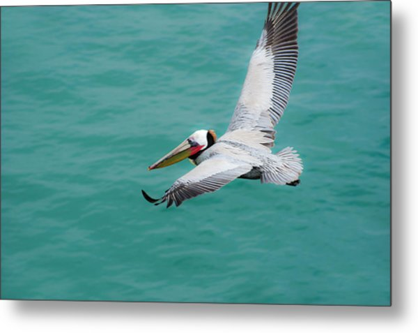 Pelican Beautiful Metal Print