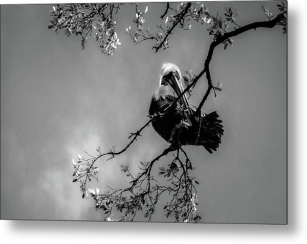 Pelican Connection Metal Print