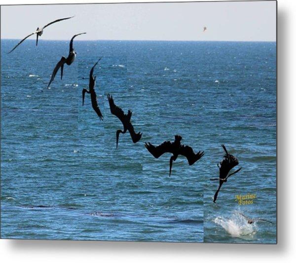 Pelican Dive 7 Photos In 2.5 Seconds Metal Print