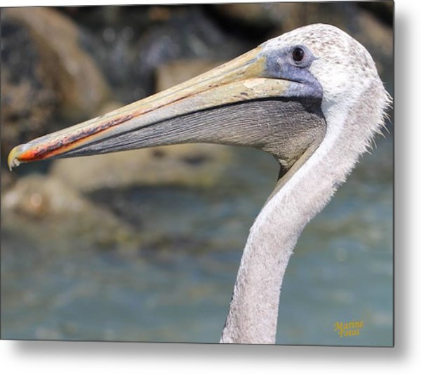 Pelican Face  That Only A Mother Could Love Metal Print