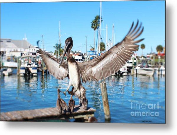 Pelican Flying In Metal Print