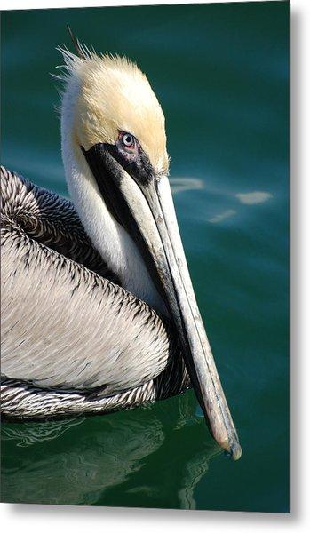 Pelican From Florida Metal Print