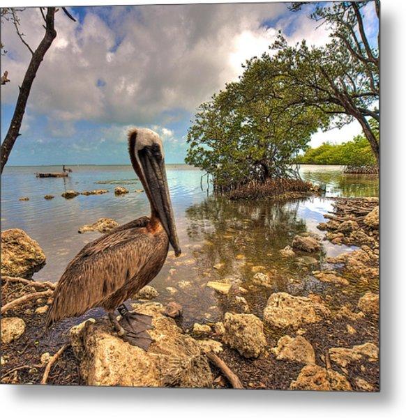 Pelican In The Florida Keys Metal Print