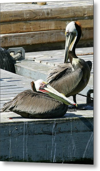 Pelican On The Dock Metal Print