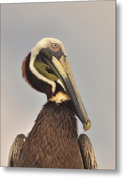 Pelican Portrait Metal Print