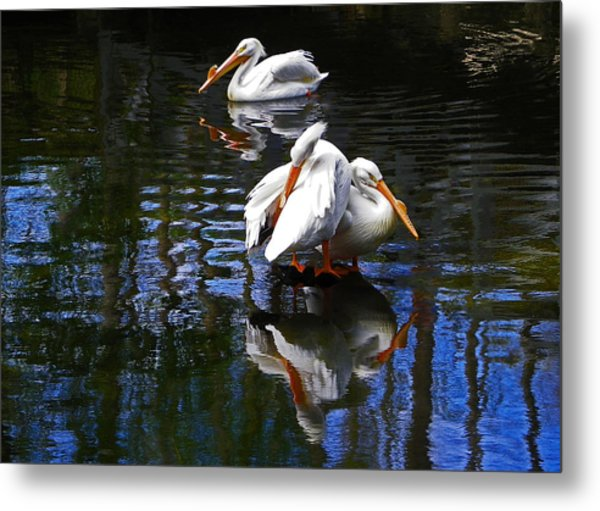 Pelican Reflections Metal Print