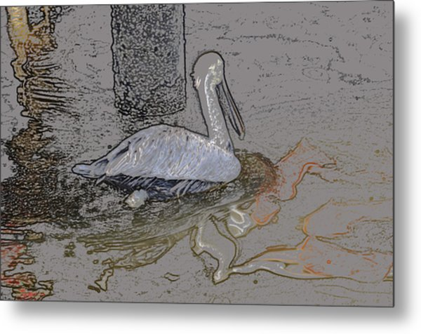 Pelican Swim IIi Color Pencil Metal Print