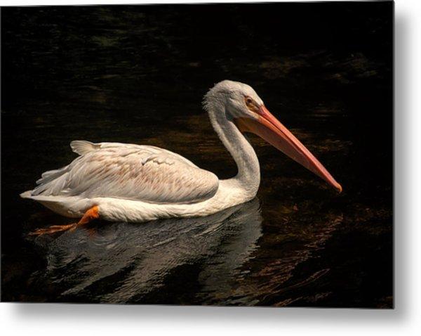 Pelican Swimming In Salisbury Metal Print