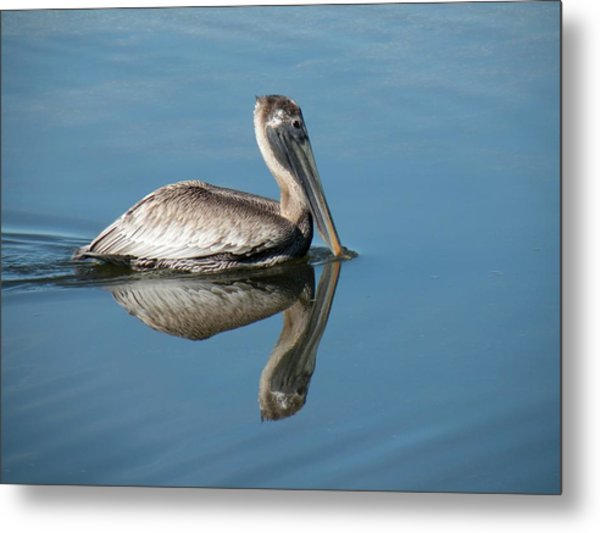 Pelican With Reflection Metal Print by Rosalie Scanlon