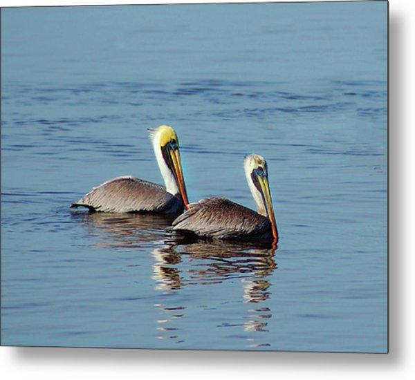 Pelicans 2 Together Metal Print
