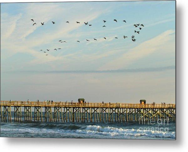 Pelicans At Flagler Beach Metal Print
