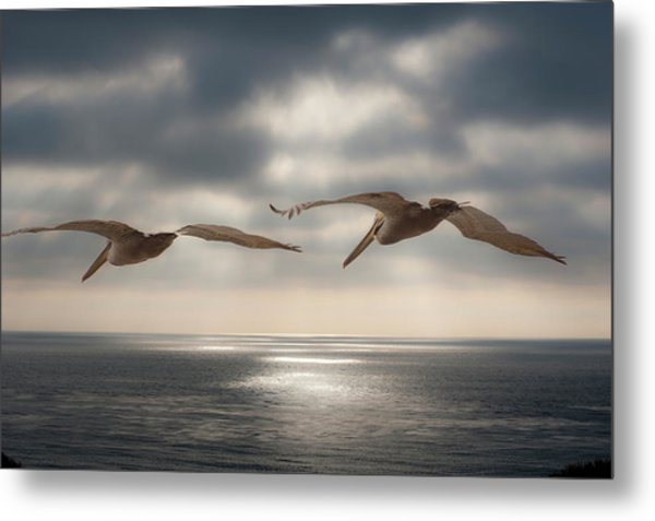 Pelicans At Sea Metal Print