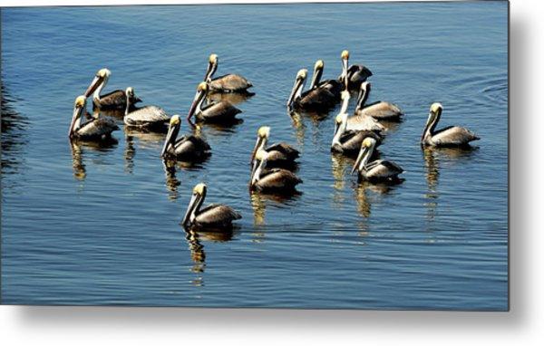 Pelicans Blue Metal Print