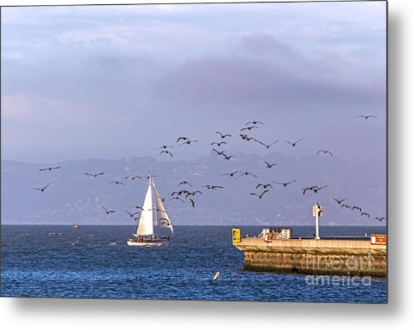Metal Print featuring the photograph Pelicans Pelicans by Kate Brown