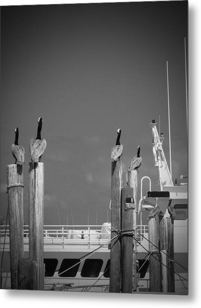 Pelicans Perched By Sailboat Metal Print by Megan Verzoni
