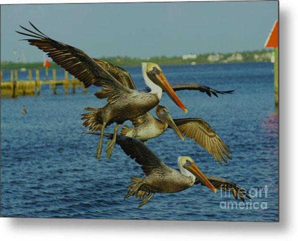 Pelicans Three Amigos Metal Print