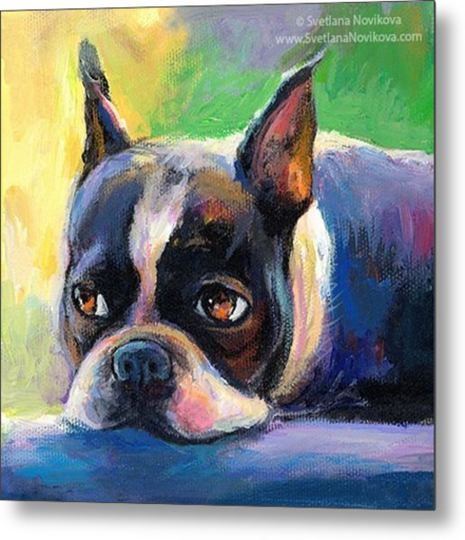 Pensive Boston Terrier Painting By Metal Print