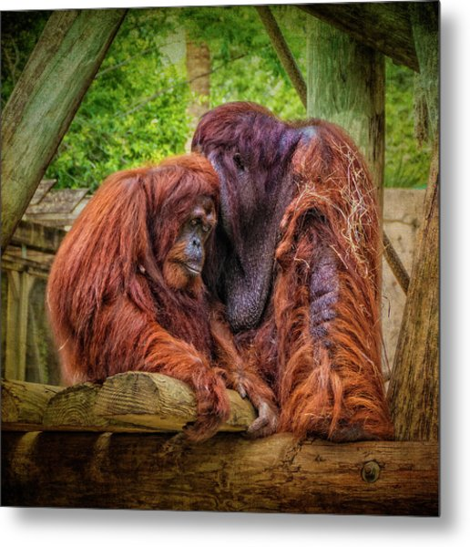 People Of The Forest Metal Print
