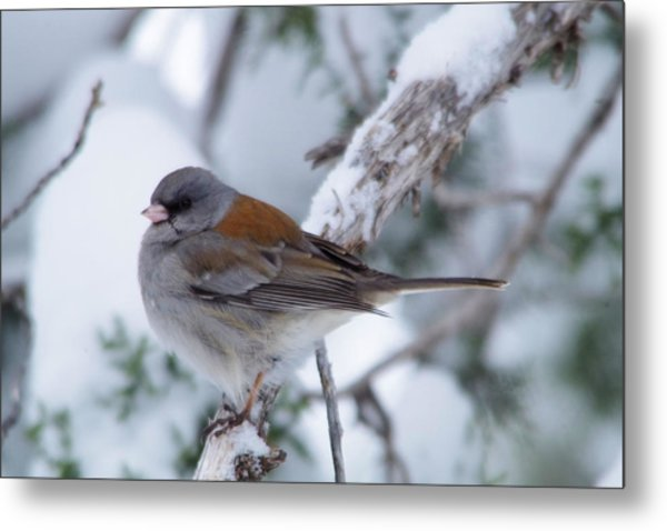 Perched And Pretty Metal Print
