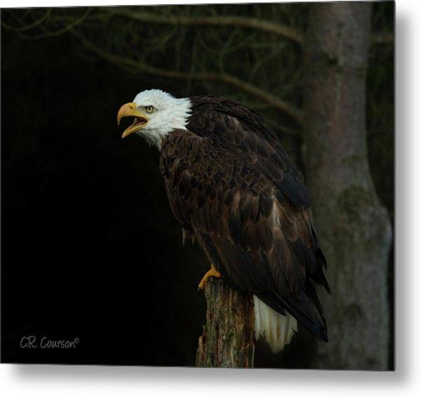 Perched Bald Eagle Metal Print