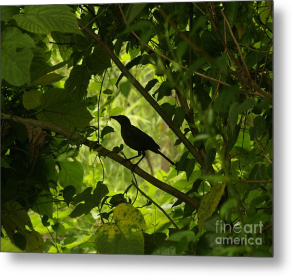 Perched In Green  Metal Print
