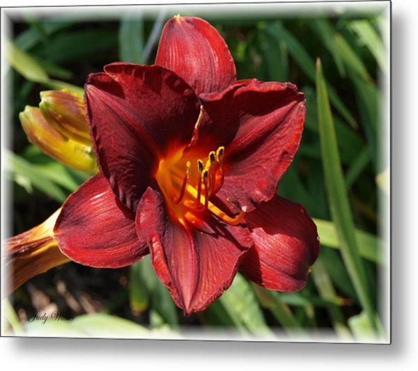Perfect Lily Metal Print by Judy  Waller