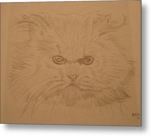 Persian Cat 4 Metal Print by Bo Klinge