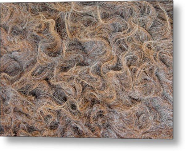 Metal Print featuring the photograph Peruvian Burro Curls by Britt Runyon