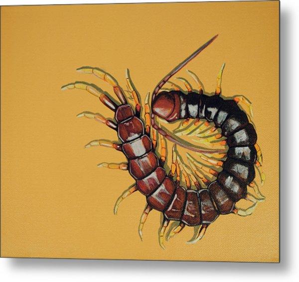 Peruvian Centipede Metal Print