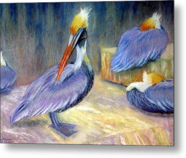 Peruvian Pelicans One  Pastel Metal Print