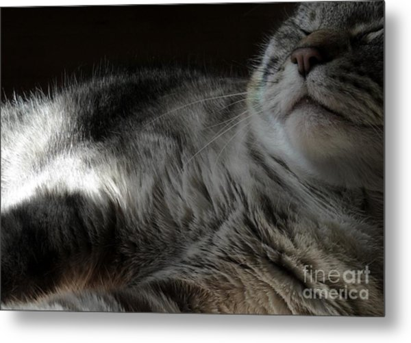 Pet Portrait - Lily Three Metal Print