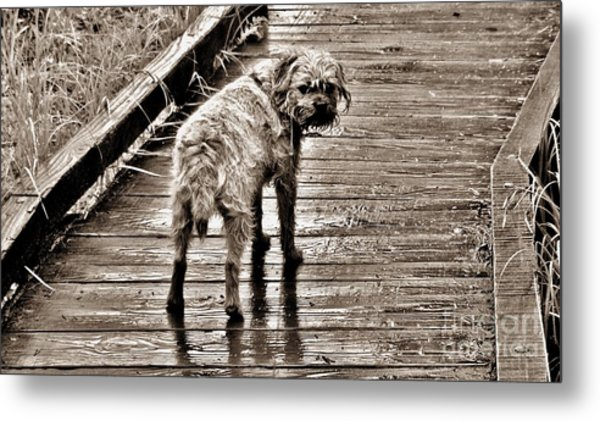 Pet Portrait - Puck Metal Print