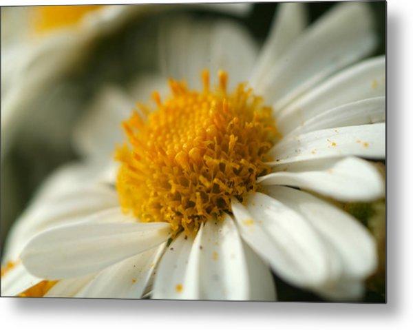 Petals And Pollen Metal Print