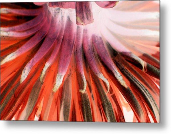 Petals In Red Metal Print