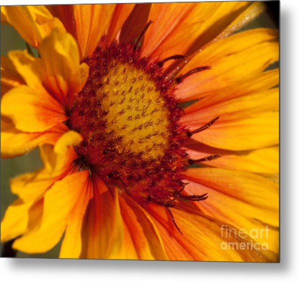 Petals Of Fire Metal Print