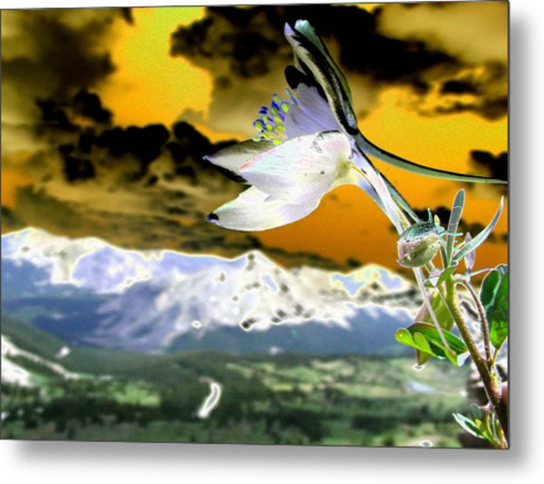 Petals To The Sky Metal Print by Peter  McIntosh