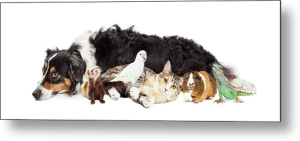 Pets Together On White Banner Metal Print by Susan Schmitz