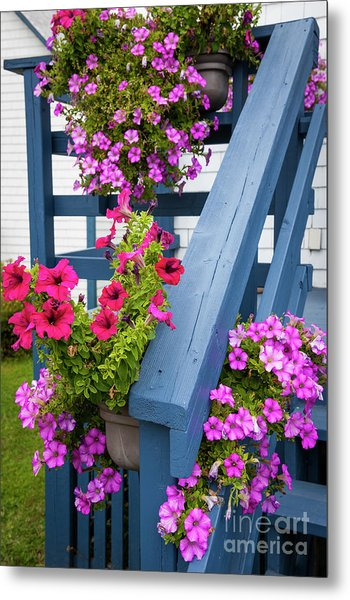 Metal Print featuring the photograph Petunias On Blue Porch by Elena Elisseeva