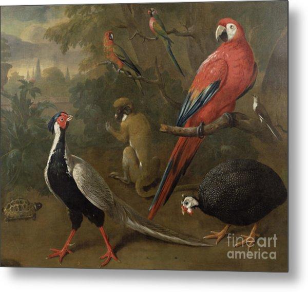 Pheasant Macaw Monkey Parrots And Tortoise  Metal Print