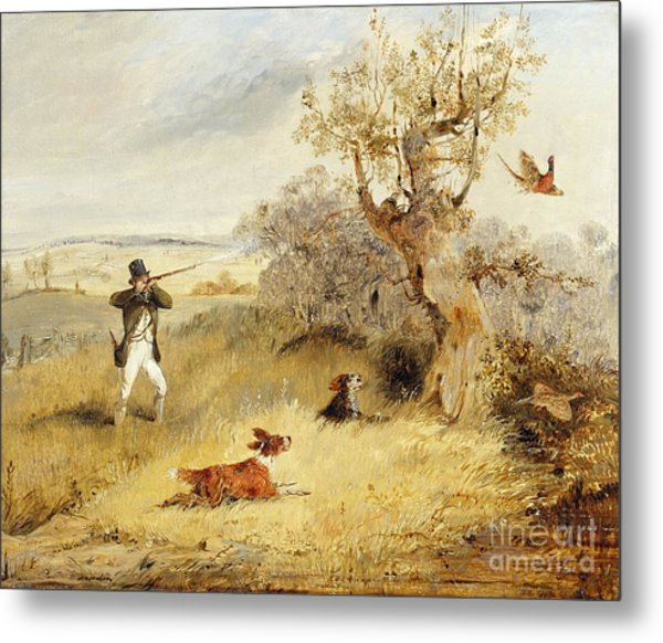 Pheasant Shooting Metal Print