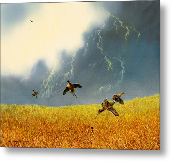 Pheasants On The Rise Metal Print by Don Griffiths