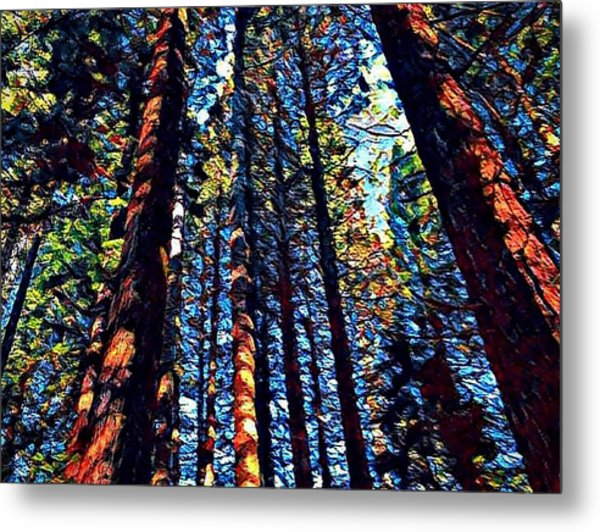 Phil's Trees Metal Print