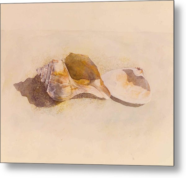 Phinney's Point Shells Metal Print
