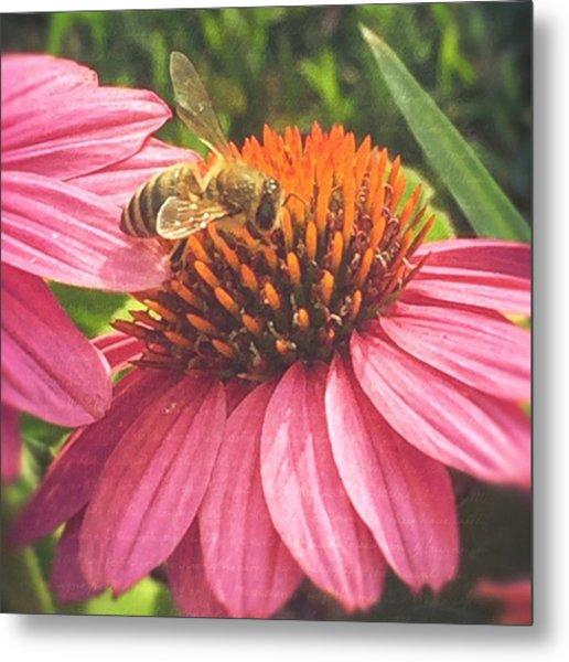 #photooftheday #bee #flower Metal Print