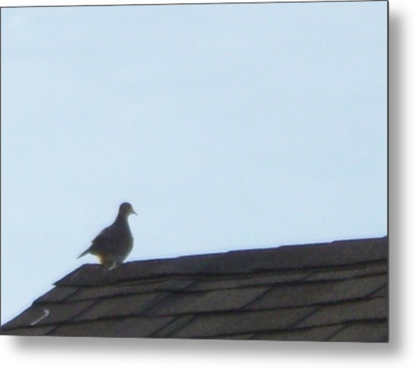 Picture Of A Pigeon Metal Print