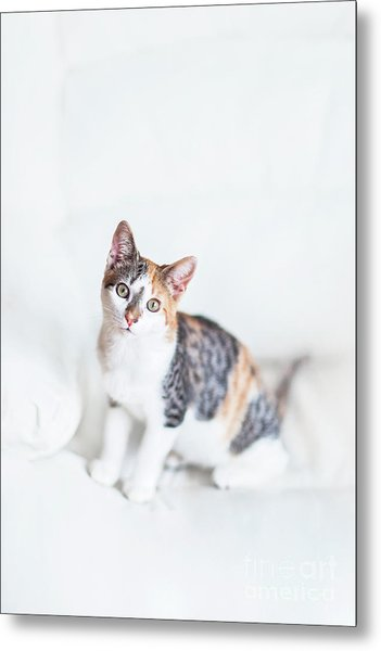 Picture Purfect Metal Print