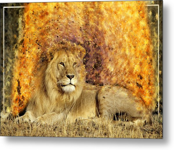 Pieces Of A Lion Metal Print